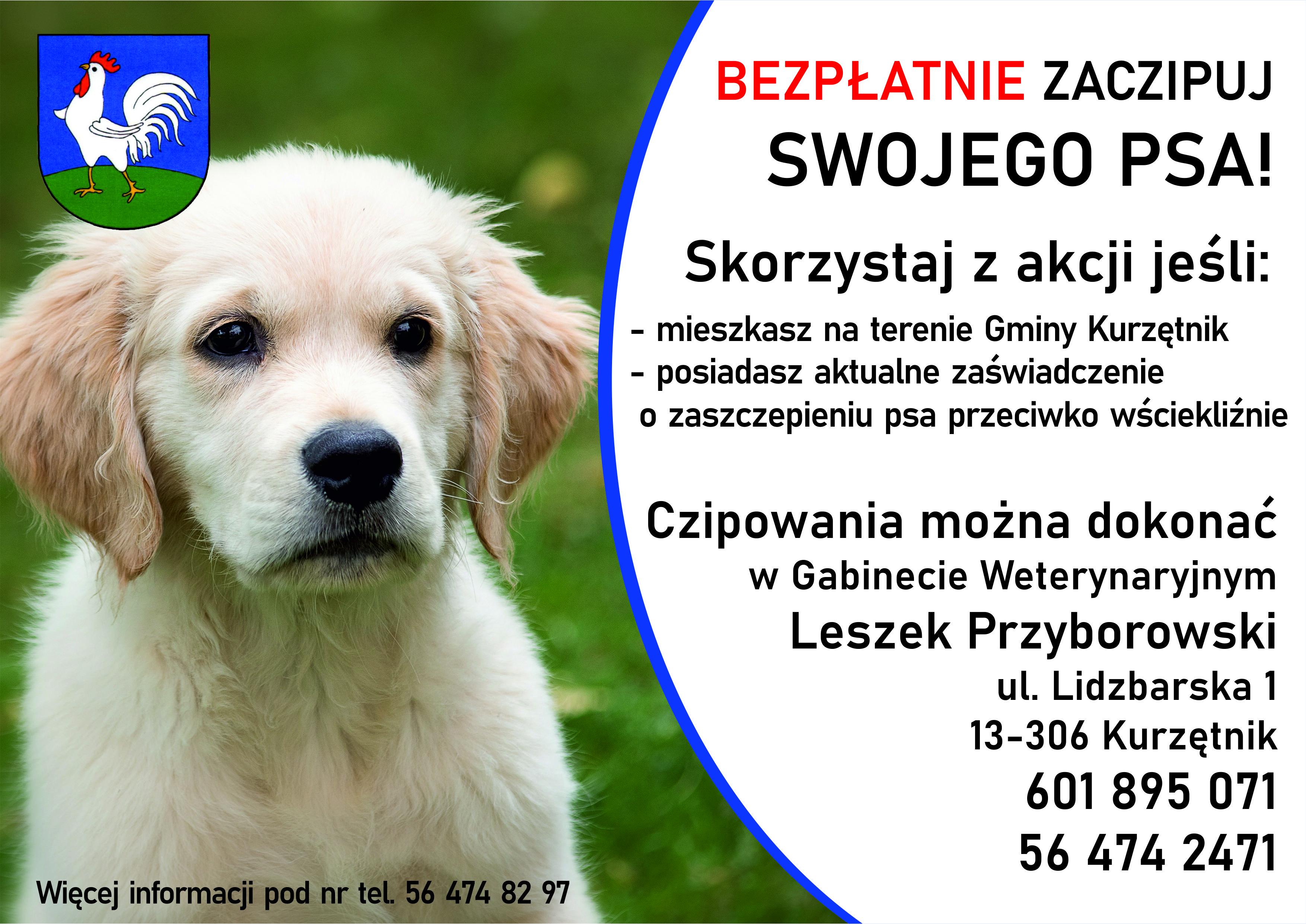 Ilustracja do informacji: Bezpłatne czipowanie psów