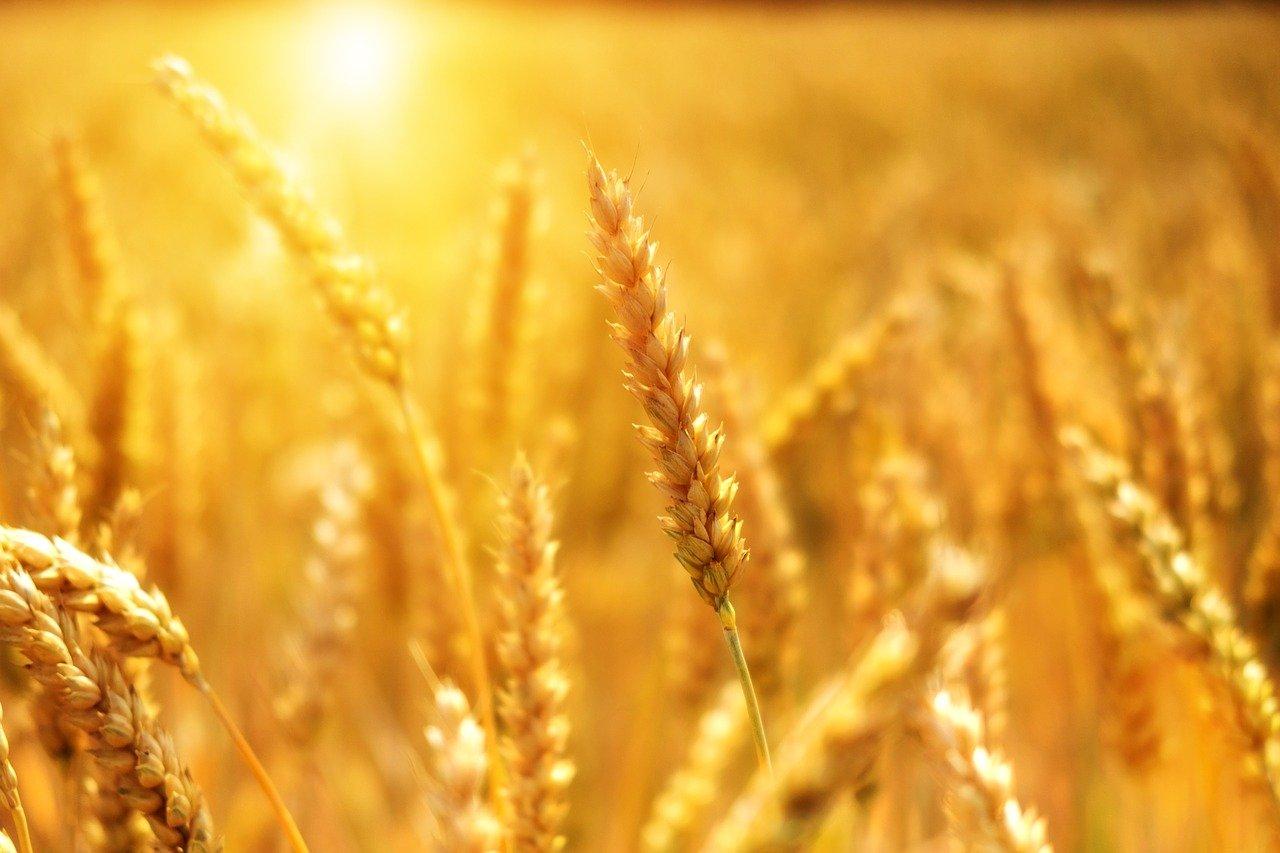 Ilustracja do informacji: Fundusze promocji produktów rolno-spożywczych.